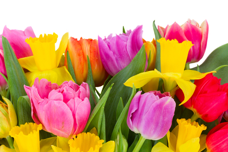 bosom: blooming pink and red  tulips with daffodils border  on wood