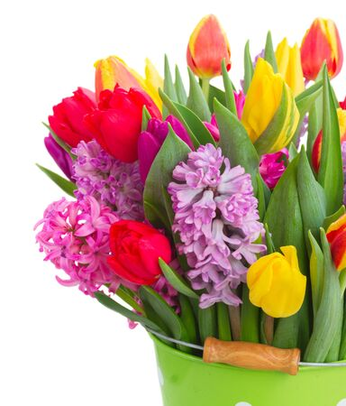 hyacinths: Pink and violet hyacinths with tulips flowers close up  isolated on white background