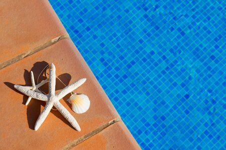 sripes: seashells and starfish near water of pool