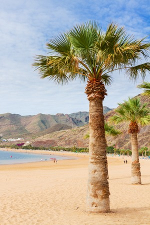 canarias: view of beach Las Teresitas with palm  at sunny summer day, Tenerife island, Canarias Spain