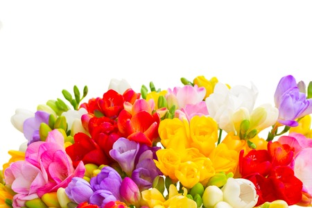 posy: Fresh freesia flowers posy border close up isolated on white background