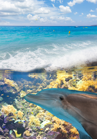 porpoise: seascape with turquoise sea and  underwater dolphin and fishes