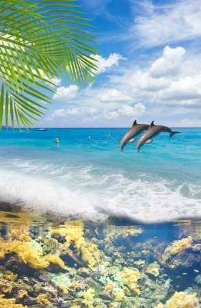 seascape with turquoise sea, underwater fishes  and jumping dolphins Stock Photo