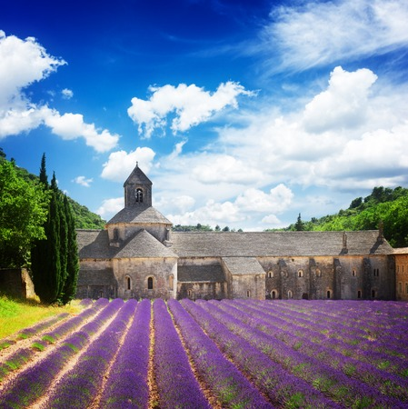 senanque: world famous Abbey Senanque and blooming  Lavender field under blue sky, France,  retro toned