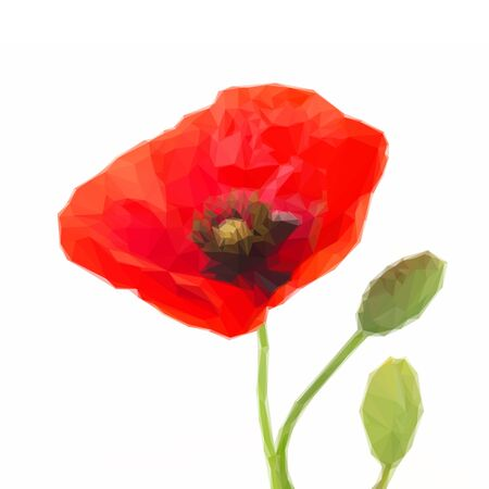 papaver: Low poly illustration Poppy flower with buds