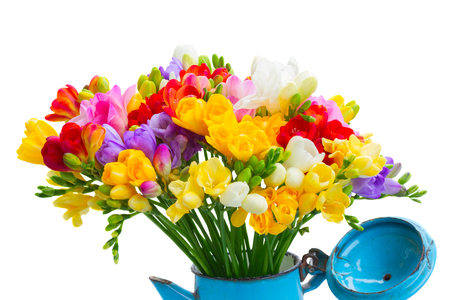 posy: Fresh freesia flowers posy in pot close up isolated on white background