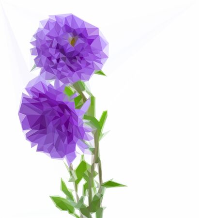 aster: Low poly illustration three aster lilac flowers isolated on white background Stock Photo