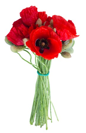 oriental poppy: Posy of Poppy red fresh flowers isolated on white background