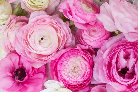 fiori Ranunculus rosa e bianchi vicino sfondo