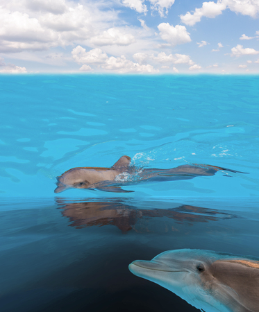 porpoise: seascape with dolphins in turquoise sea waters under blue sky