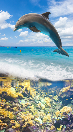 seascape with underwater fishes and jumping dolphin
