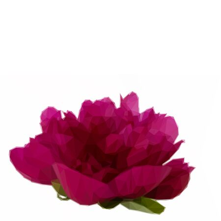 flower close up: Low poly illustration red peony flower close up on white