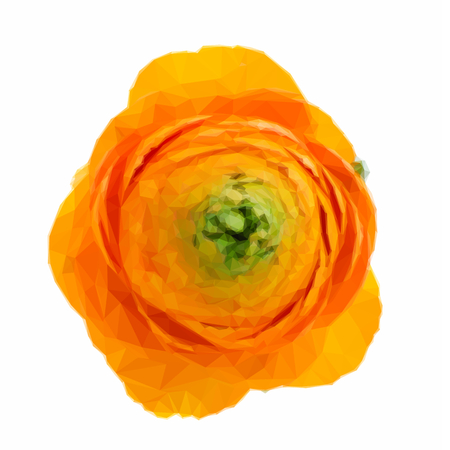 buttercup  decorative: Low poly illustration one orange ranunculus on white background