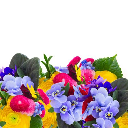 posy: Posy of violets, pansies, daisies and ranunculus border isolated on white background