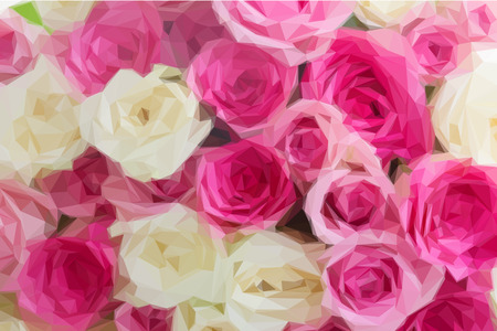 flowers close up: Low poly illustration background of pink and white fresh rose flowers close up Illustration
