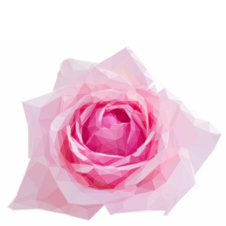 blooming: Low poly illustration of pink blooming rose