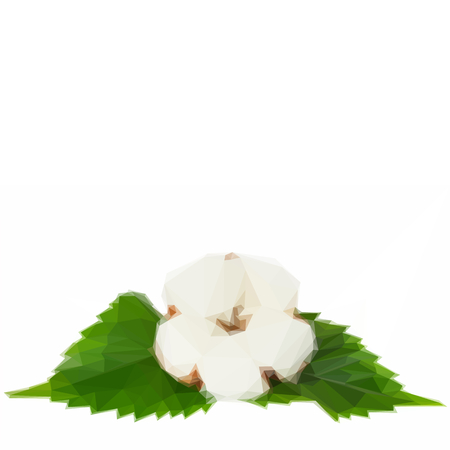 cotton plant: Low poly illustration One cotton plant bud with green leaves