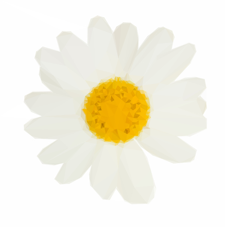 camomiles macro: Low poly illustration of white daisy flowers Illustration