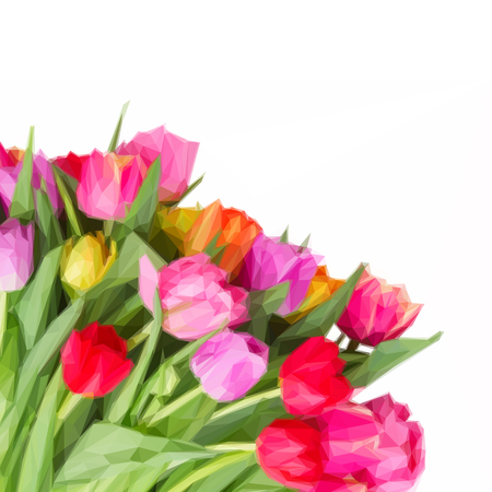 bosom: Low poly illustration bunch of fresh pink, purple and red fresh tulips close up