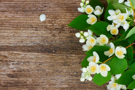 redolence: Jasmine fresh flowers and leaves border on wooden table Stock Photo