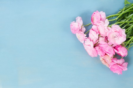 Pink ranunculus flowers on blue wooden background