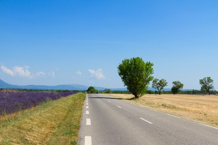 brigt: view of country road at brigt summer day, Provence, France