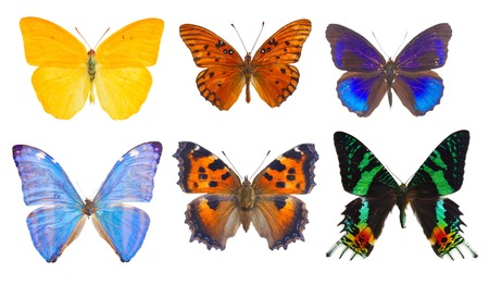 set of multicolored tropical flying batterflies isolated over white background Stock Photo
