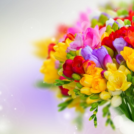 posy: Fresh freesia flowers and buds posy close on violet background