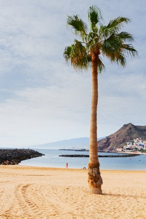 canarias: view of beach Las Teresitas with palm tree at sunny summer day, Tenerife island, Canarias Spain