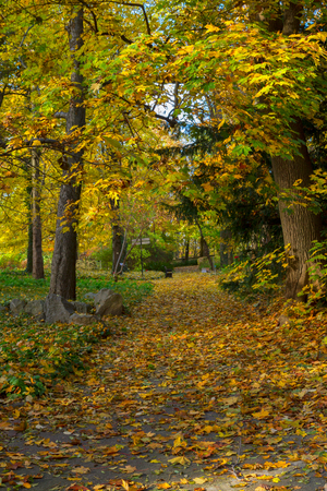 park path: Fall park path with fallen leaves and yellow trees