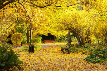 yelow: Fall park path with vibrant yelow fallen leaves and tree Stock Photo