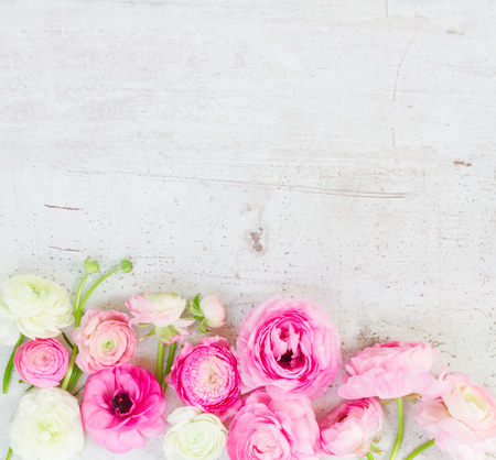 Pink and white ranunculus flowers border on aged white wooden desktop with copy space