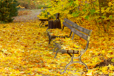 park path: Fall park path with fallen yllow fresh leaves and benches