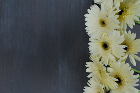 herbera: Beige gerbera flowers border on dark wooden table background close up