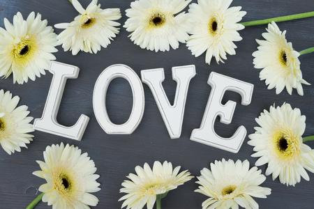 herbera: Beige gerbera flowers frame on dark wood with love letters