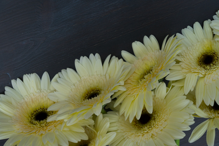 Cream gerbera flowers border on dark wooden table close up Stock Photo