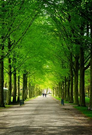 den: Alley in Clingendael park, Den Haag, Netherlands, retro toned Stock Photo