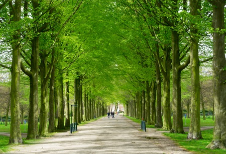 the hague: Spring alley in Clingendael park, Den Haag, Netherlands Stock Photo