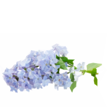 Low poly illustration Bunch of fresh blue lilac flowers isolated on white background