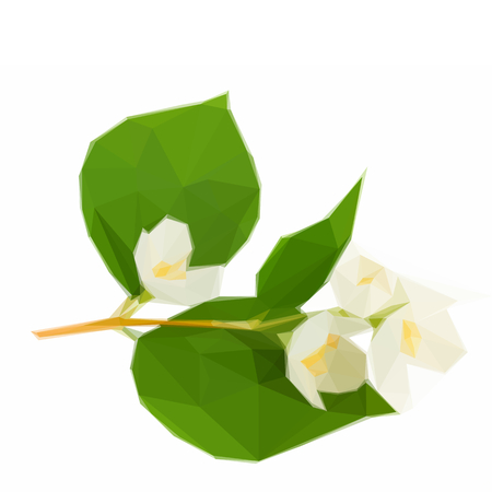 Low poly illustration Jasmine flowers and leaves twig isolated on white background