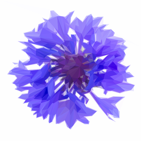cornflower: Low poly illustration Blue cornflower button isolated on white background Illustration