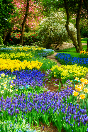 Blue and yellow spring of flowers in holland garden Keukenhof, Netherlands, retro toned