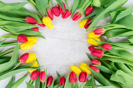 fresh yellow and red tulips flowers with green leaves frame on white aged background