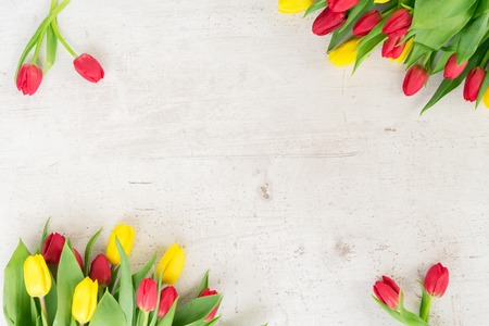 yellow and red tulips flowers with green leaves frame on white aged background
