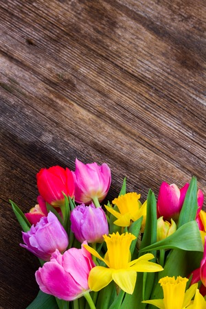 fresh pink and red tulips with yellow narcissus on wood with copy space