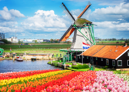 traditional Dutch windmill and red, pink and yellow tulips rows, Netherlands, toned Standard-Bild