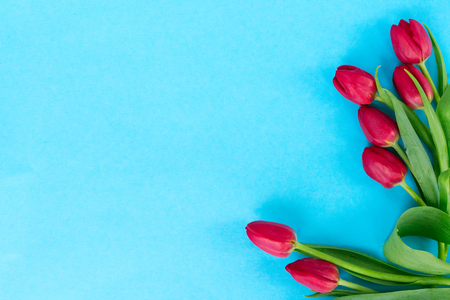 frame of red tulips on bright blue background