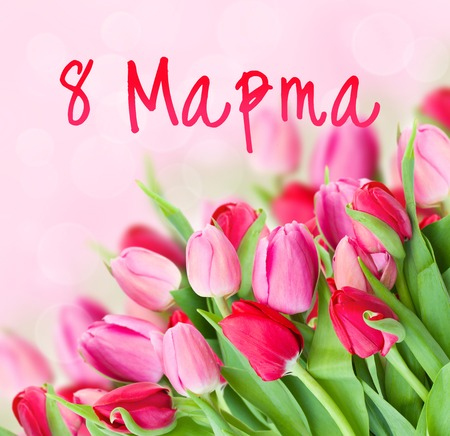 bouquet of fresh spring pink tulips on bokeh background for 8 March international womens day