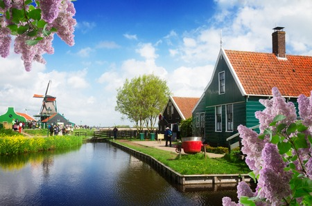 rural dutch scenery of small old houses and canal in Zaanse Schans,, Netherlands with lilac flowers