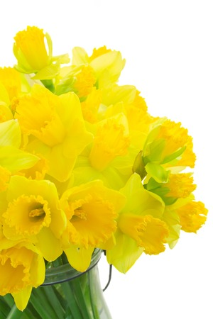 Bright yellow daffodils flowers in vase close up isolated on white background